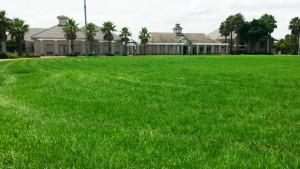 Cocopan Grass